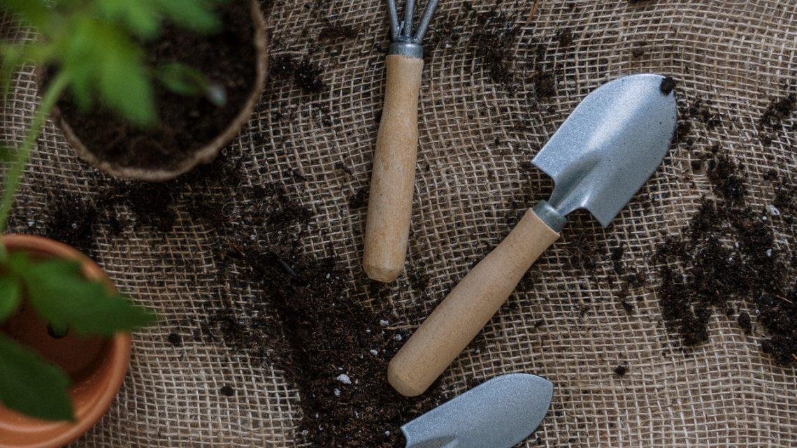 Laat je tuin opbloeien in de vroege lente