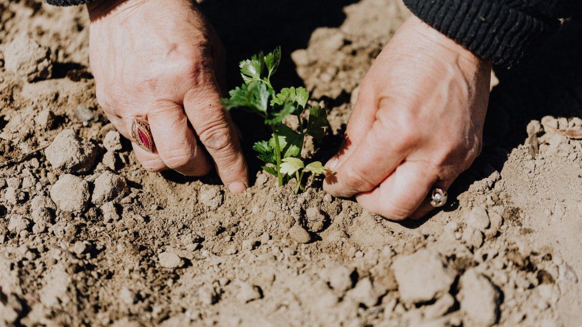 Voorjaar 2021: Leuke en handige dingen voor in je tuin!