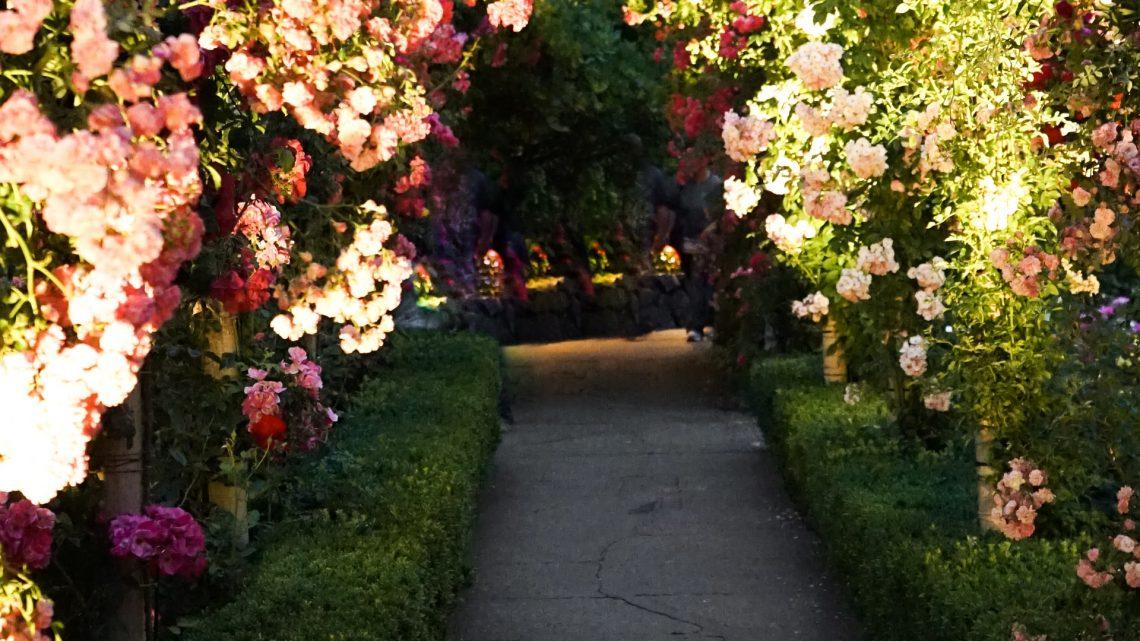 Hovenier Emmeloord: Maak jouw tuin weer netjes