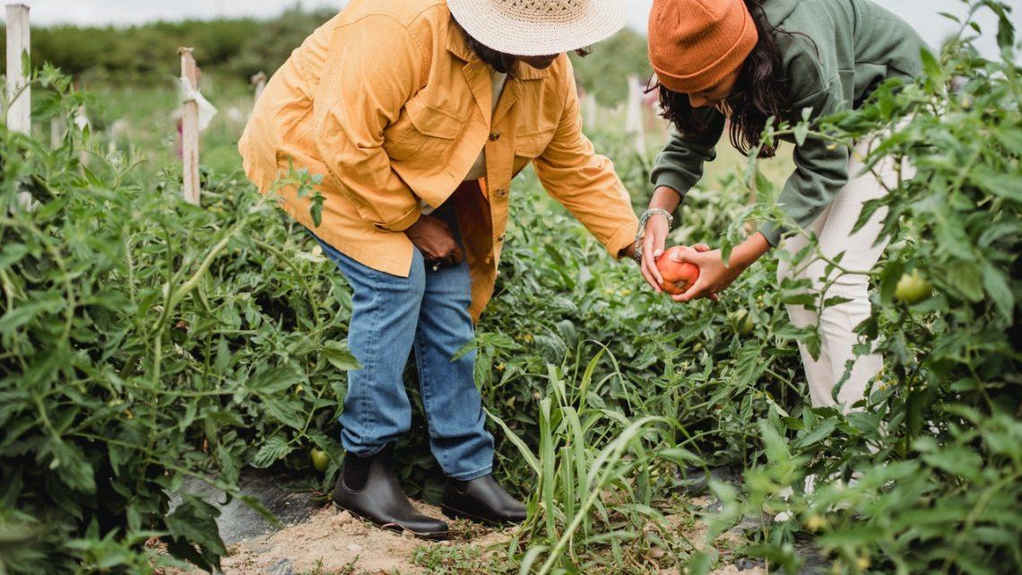 Moestuinbakken maken de boer in ieder van ons wakker
